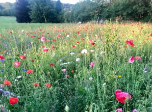 The Big Picture: Wild flowers in Wooburn Park by Cheryl Chapman