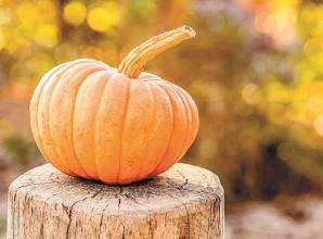 TATA set to hold pumpkin and squash event in Twyford this Saturday