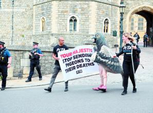 PETA protest against pigeon racing  outside Windsor Castle