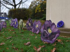 Ascot purple poppies remember war animals