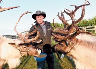 Mythbusting on the reindeer farm