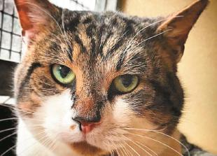 Pets Corner: A big thank you from RSPCA East Berkshire