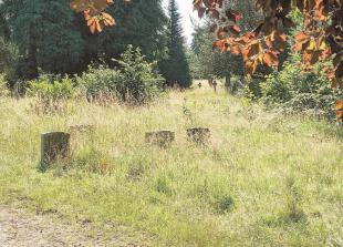 Visitor left 'horrified' by state of Maidenhead cemetery