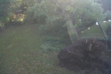 Fallen trees block roads throughout the area