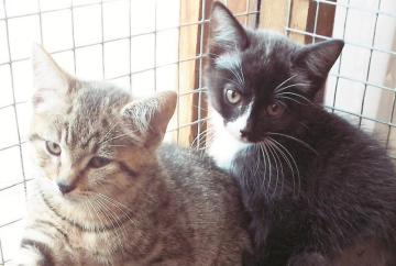 Pets Corner: Saffron and her kittens at Maidenhead Cat Rescue